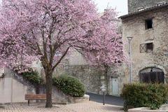 Fjäder i Provence Royaltyfria Bilder