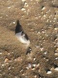 Fjäder i sand med skal Arkivfoton