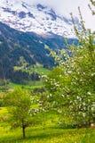 Fjäder i schweiziska Alps Arkivbilder