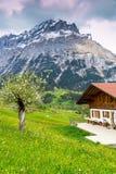 Fjäder i schweiziska Alps Royaltyfri Bild