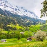 Fjäder i schweiziska Alps Arkivbild