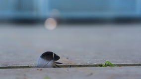 Fjäder på asfalt i spricka Royaltyfri Bild