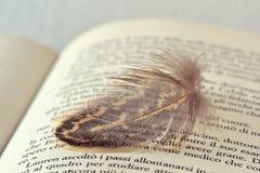Fjäder på boken Arkivfoton