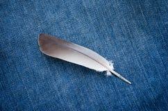 Fjäder på jeans Fotografering för Bildbyråer