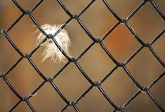 Fjäder på rastret arkivbilder