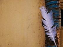 Fjäder på väggen Arkivbilder