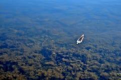Fjäder som svävar på stillhet, sjövatten Arkivbild