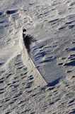 Fjäder som täckas med sand, Ameland ö Arkivfoto