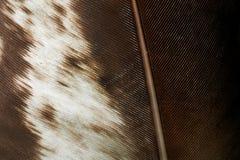 Fjäderbakgrund arkivbilder