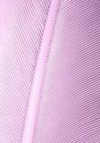 Fjäderbakgrund arkivbild