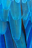 Fjäderbakgrund Royaltyfri Bild