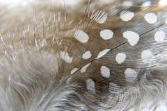 Fjäderbakgrunder Royaltyfri Fotografi