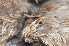 Fjäderbuketter Royaltyfria Bilder