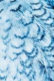 Fjäderdräktbakgrund royaltyfri bild