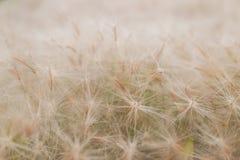 Fjädergräs Royaltyfria Foton