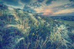 Fjädergräs i en vind V Arkivfoton