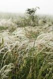Fjädergräs i wind Fotografering för Bildbyråer
