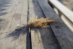Fjädergräs och dess skugga Fotografering för Bildbyråer