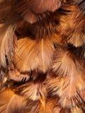fjädergrupp Royaltyfria Bilder