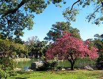 Fjäderliggande i den japanska trädgården Royaltyfria Foton