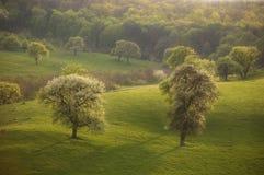 Fjäderliggande med grön gräs och trees & sun royaltyfri bild