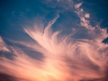 Fjäderlika moln Illumintated, genom att ställa in den guld- solen mot en briljant blå himmel royaltyfria bilder