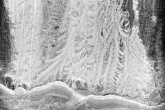 Fjäderlikt frostat fönster för silver Royaltyfri Fotografi
