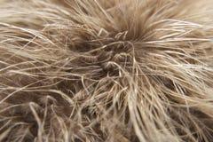 Fjädermakro Royaltyfria Bilder
