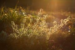 Fjädern blommar in i soluppgången Arkivfoto