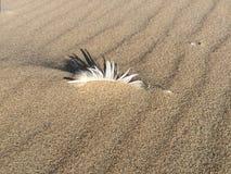 Fjädern sandpapprar in med solen Royaltyfria Foton