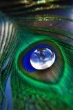 fjäderpåfågel Royaltyfria Foton