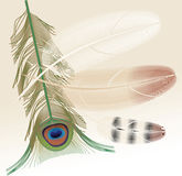 fjäderpåfågel Arkivbild