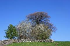 fjädertrees Royaltyfri Fotografi
