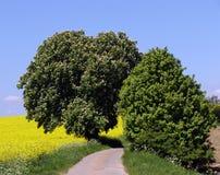 fjädertrees Arkivfoto
