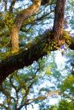 fjädertrees Arkivfoton