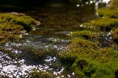fjädervatten Arkivfoton