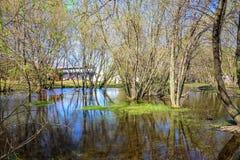 Fjädra översvämmade träd med att blomstra knoppar i den Kolomenskoye museum-reserven Arkivfoton