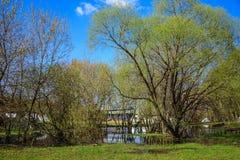 Fjädra översvämmade träd med att blomstra knoppar i den Kolomenskoye museum-reserven Arkivbild