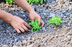 Fjädra arbete i trädgården, att arbeta i trädgården för vår Arkivfoton