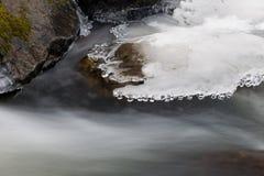 Fjädra bäcken Fotografering för Bildbyråer