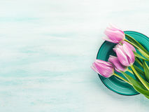 Fjädra bakgrund för pastellfärgad färg easter för den purpurfärgade tulpan blom- grön Fotografering för Bildbyråer