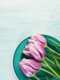 Fjädra bakgrund för pastellfärgad färg easter för den purpurfärgade tulpan blom- grön Royaltyfri Fotografi