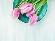 Fjädra bakgrund för pastellfärgad färg easter för den purpurfärgade tulpan blom- grön Royaltyfria Foton