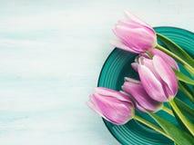 Fjädra bakgrund för pastellfärgad färg easter för den purpurfärgade tulpan blom- grön Arkivbilder
