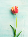 Fjädra bakgrund för pastellfärgad färg för den easter tulpan blom- minsta Royaltyfri Foto