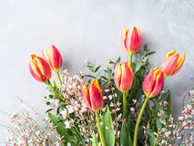Fjädra bakgrund för pastellfärgad färg för den easter tulpan blom- minsta Royaltyfria Bilder