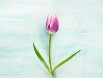 Fjädra bakgrund för pastellfärgad färg för den easter tulpan blom- minsta Royaltyfria Foton
