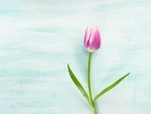 Fjädra bakgrund för pastellfärgad färg för den easter tulpan blom- minsta Arkivfoton