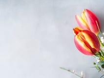 Fjädra bakgrund för pastellfärgad färg för den easter tulpan blom- minsta Arkivbilder