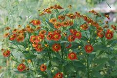 fjädra bakgrund för skönhet för den ljusa trädgårds- naturen för blommagräsplanlövverk saftig arkivbild
